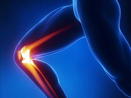 Anatomy-of-the-Knee
